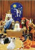 AVANTI PRESS クリスマスカード<犬×小屋>
