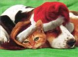 AVANTI PRESS クリスマスカード<猫×犬×ぼうし>