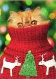 AVANTI PRESS クリスマスカード<猫×ぼうし>