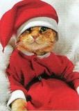 AVANTI PRESS クリスマスカード<猫×コスチューム>