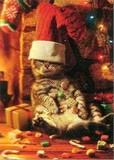 AVANTI PRESS クリスマスカード<猫×靴下>