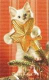 ART UNLIMTED クリスマスミニカード<猫×星>