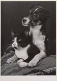 ART UNLIMTED ポストカード <犬×猫>