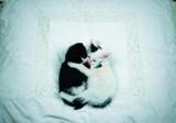 ART UNLIMTED ポストカード <猫×ベッド>