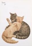 ART UNLIMTED ポストカード <猫>