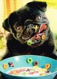 AVANTI PRESS グリーティングカード  [バースデー] 犬