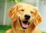 AVANTI PRESS グリーティングカード  [バースデー] 犬×スマイル