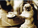 AVANTI PRESS グリーティングカード  [バースデー] 犬×カフェ