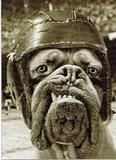 AVANTI PRESS グリーティングカード  [バースデー] 犬×スポーツ