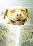 AVANTI PRESS グリーティングカード  [バースデー] 犬×新聞