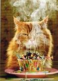 AVANTI PRESS グリーティングカード  [バースデー] 猫×キャンドル