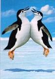 AVANTI PRESS グリーティングカード  [バースデー] ペンギン