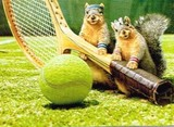 AVANTI PRESS グリーティングカード  [バースデー] リス×テニスラケット
