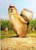 AVANTI PRESS グリーティングカード  [バースデー] プレーリードッグ×野球