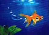AVANTI PRESS グリーティングカード  [バースデー] 金魚