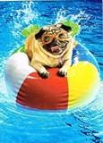 AVANTI PRESS グリーティングカード  [バースデー] 犬×プール