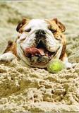AVANTI PRESS グリーティングカード  [バースデー] 犬×砂遊び