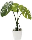 インテリアグリーン リアルモンステラKG【観葉植物】【緑】【床置き】【フェイクグリーン】