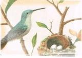 FRINGE STUDIO トレイ <鳥×たまご>