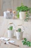 【Plant Style】ブランポット カクタス サボテン 多肉植物 栽培 プラント 観賞植物 インテリア