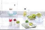 【Plant Style】ヨーク サキュレント 多肉植物 プラント 陶器 白 観賞植物 インテリア