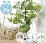 【CT触媒】【アーティフィシャルグリーン】グレープパイン