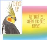 Stockwell Greetings グリーティングカード がんばれ!<鳥>