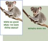 Stockwell Greetings グリーティングカード <コアラ>