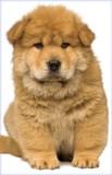 Stockwell Greetings グリーティングカード <犬>