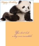 Stockwell Greetings グリーティングカード バースデー <パンダ>