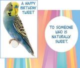 Stockwell Greetings グリーティングカード バースデー <インコ×鳥>