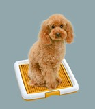 Pet Product Toilet Sanitation Toy Poodle Training Pet Tray