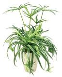 【観葉植物 造花】オリヅルランポット/造花 グリーン/植物/室内装飾