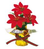 【クリスマス】ポインセチア ミニポットレッド