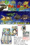びっくり卵カメ