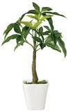 インテリアグリーン パキラKT【緑】【観葉植物】【光触媒】【フェイクグリーン】