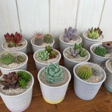 日本製 【春夏の花・グリーン】] 観葉植物 陶器入れ