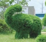 【大人気★動物トピアリー】50cm ゾウS
