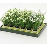 ずっとお楽しみいただけます! 観葉植物H22cm 3種アソート