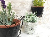 Significantly Markdown Wire Planter Basket