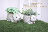 【ガーデンにお勧め】ヘッジホッグズ プランターS・L