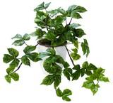 インテリアグリーン メイプルリーフLB【緑】【観葉植物】【光触媒】【フェイクグリーン】