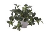 インテリアグリーン フィットニアLB【緑】【観葉植物】【光触媒】【フェイクグリーン】