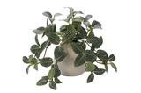 インテリアグリーン フィットニアEG【緑】【観葉植物】【光触媒】【フェイクグリーン】
