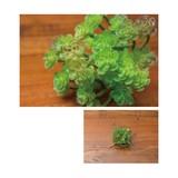 ミニアオエニウム【緑】【観葉植物】【フェイクグリーン】【造花】