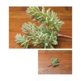 Dear Ornamental Plant Artificial Plants Artificial Flower