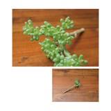 Ornamental Plant Artificial Plants Artificial Flower