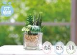 【CT触媒】消臭アーティフィシャルグリーン