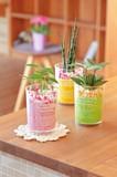 デザートカップ ミニ観葉植物 / 鉢植え インテリア