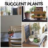 【インテリア 雑貨】サキュレント  プランツ 多肉植物 ガーデニング 観葉植物 フェイク